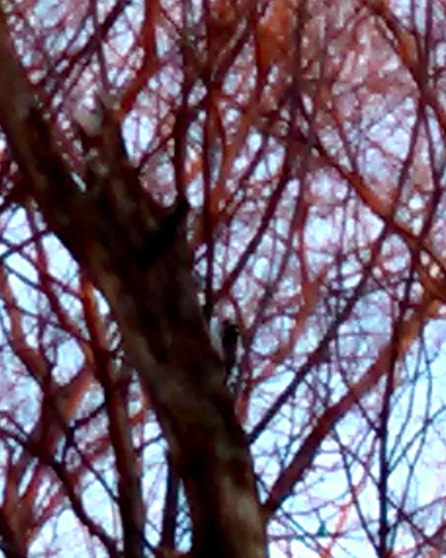woodpecker01-30-15.jpg