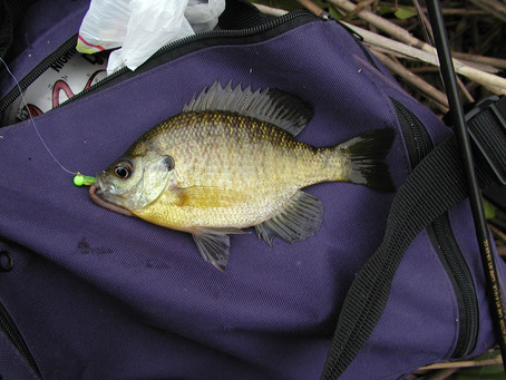 Panfish: Some more on limits