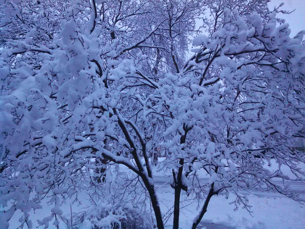 snow02-01-15dogwood.jpg