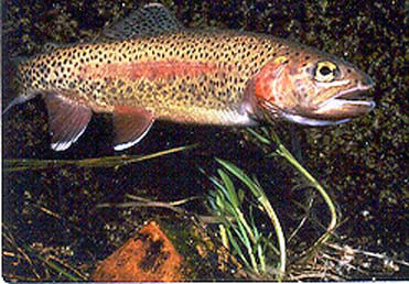 Illinois trout season: More early fly fishing options