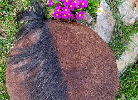 Trommel Pferd auf Kirschrahmen 35cm