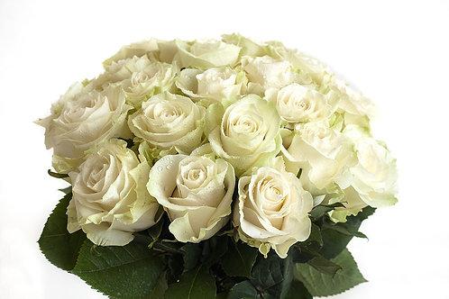 Роза белая  70 -80 см