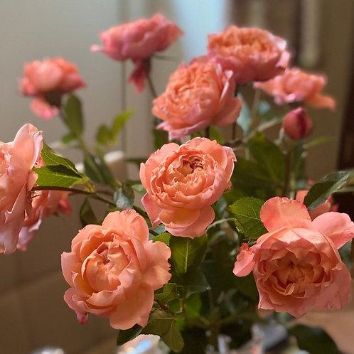 Кустовая роза пионовидная Джульет