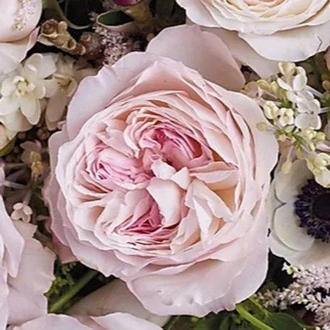 Пионовидная роза Кейра
