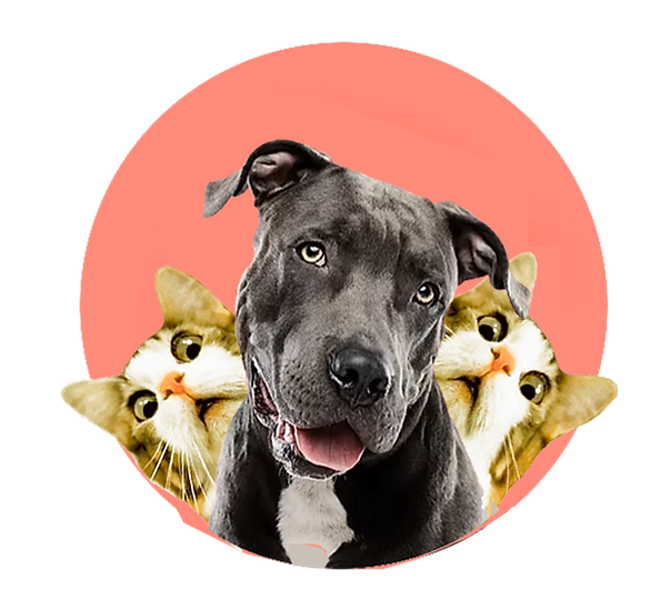 cats-dogPNG.png