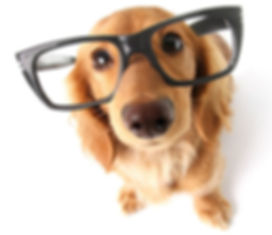 dog-glasses.jpg