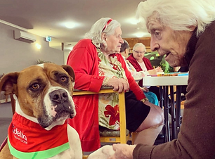 Delta Therapy Dog - Aged Care.png