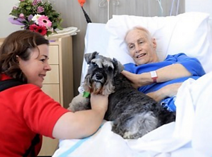 Delta Therapy Dogs - Hospital.png
