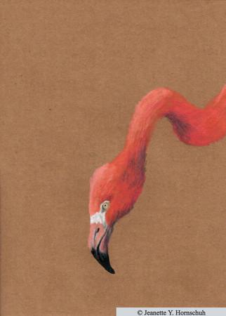 Flamingo vorn