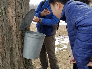 Learning how to make Maple Syrup!