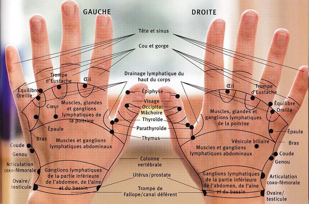 les maux du corps - psychologie - somatisation - somatiser - traitement holistique - massages réparateur - mains gauche et mains droite reliée aux organes du corps