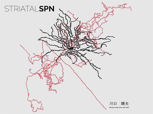 SPN.jpg