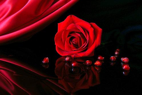 JAMMING ROSE
