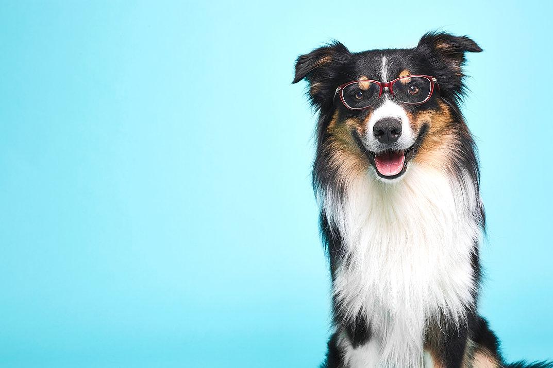 doglasses.jpg