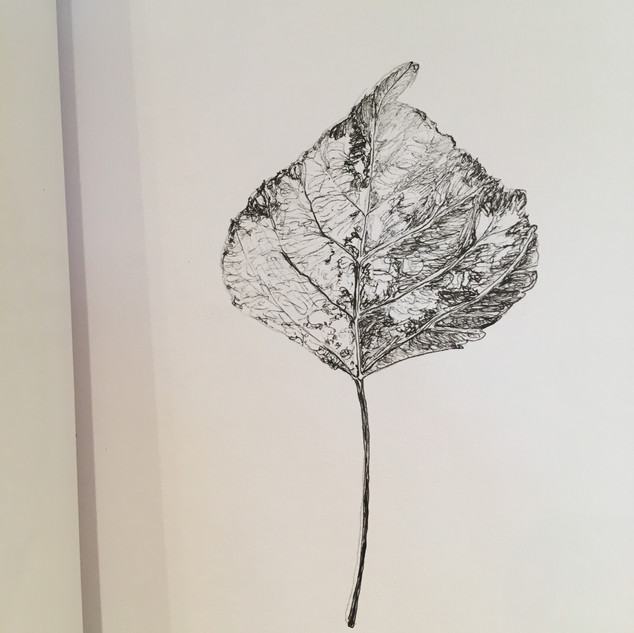The Leaf that Started it all.