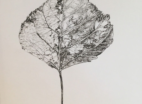 The Book of Leaves Exhibition 2019