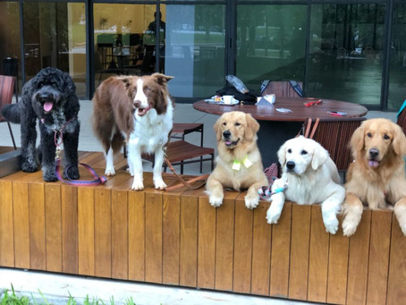 Restaurantes precisam se adaptar para aderirem a nova onda 'Pet Friendly'