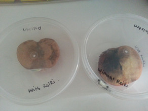 Reiki Experiments – Apples