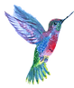 kisspng-hummingbird-drawing-humming-bird