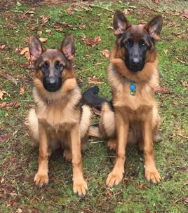 Sasha (left) and Max (right)