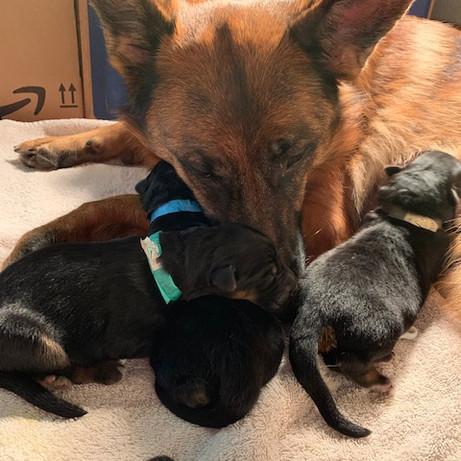 Jovie Snuggling Her Boys