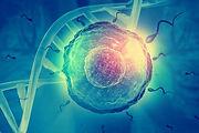 hormones sexuelles et genome