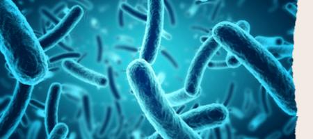 bactéries évoquées dans formation microbiote intestinal et troubles digestifs