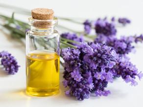 L'huile essentielle de lavande est-elle un perturbateur endocrinien ?