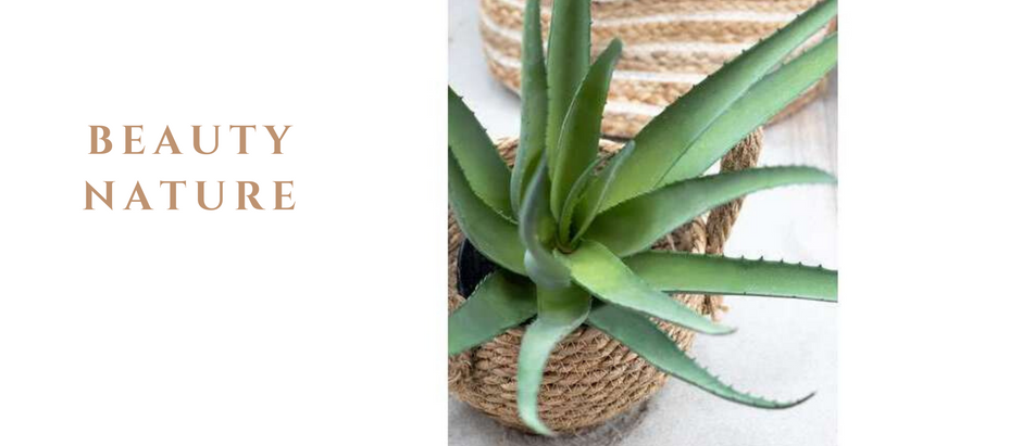 Aloe Vera, Plante Surpuissante