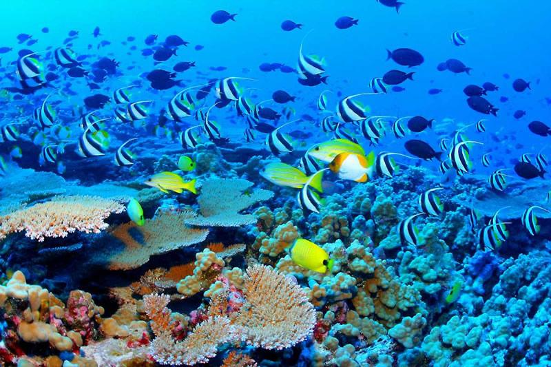 barrier_reef