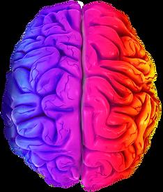 Brain-2.png