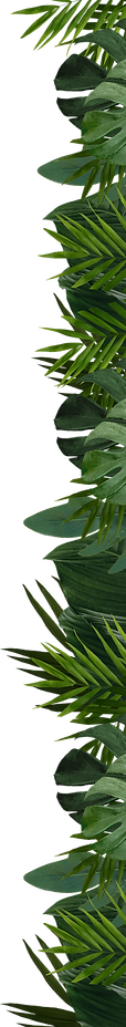 Right-Leaves.png