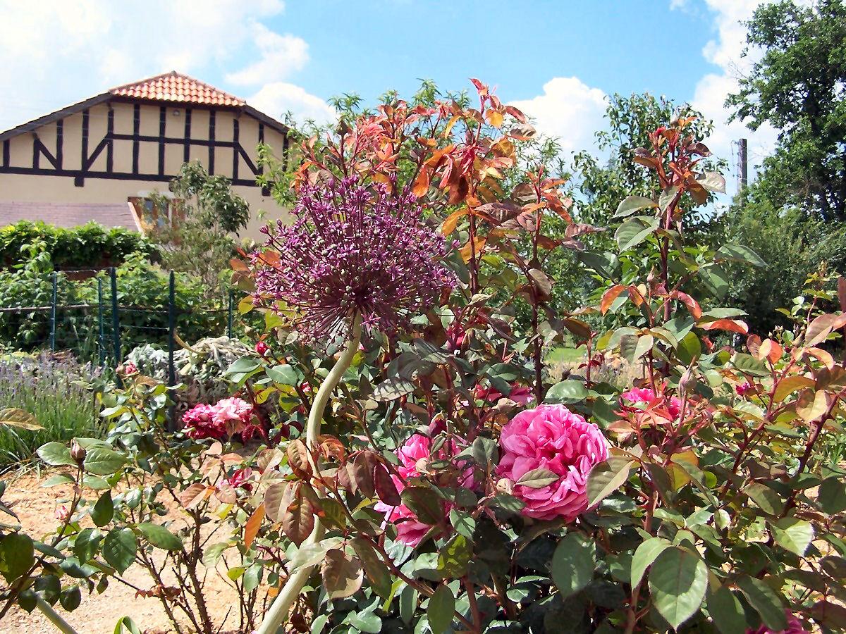 maison vue du jardin des senteurs