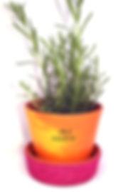 Flower pot.jpg