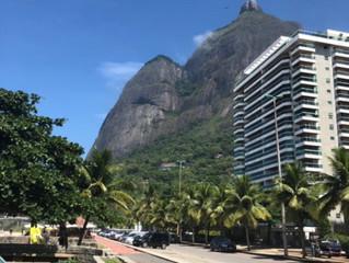 Rio jour 4: Pau-Brasil