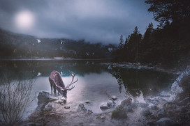 Moonlight fairy tale