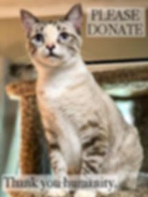 please donate 2.jpg