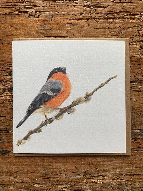 Bullfinch Study Greeting Card