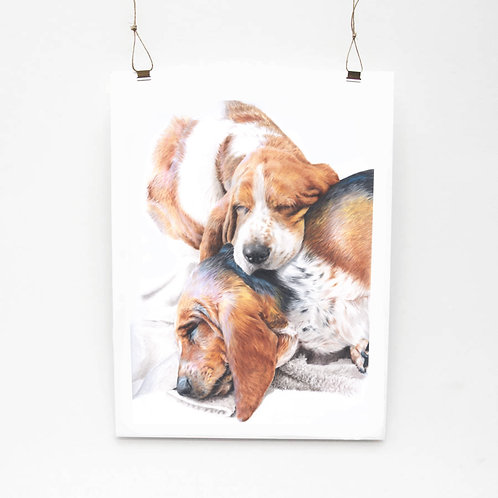 Sleeping Bassets Limited Edition Print