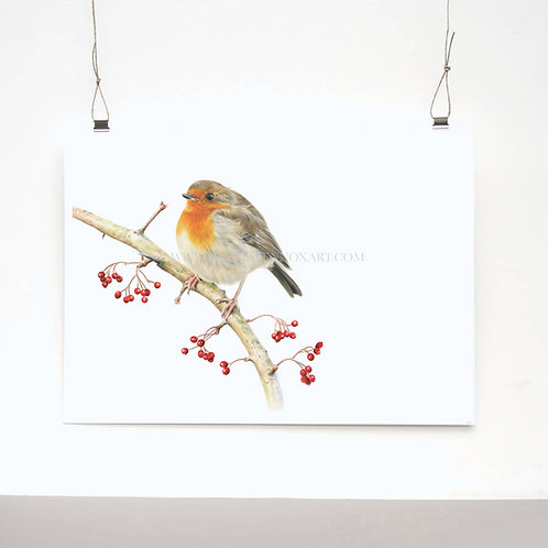 Winter Robin Limited Edition Print