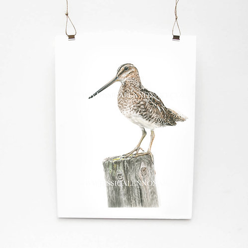Snipe Study Limited Edition Print