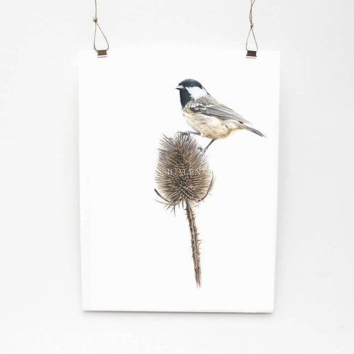 Coal Tit Study Limited Edition Print