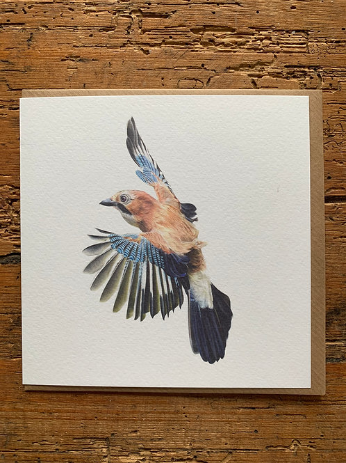 Jay Study Greeting Card