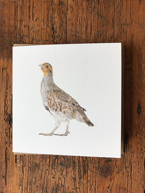 English Partridge Greeting Card