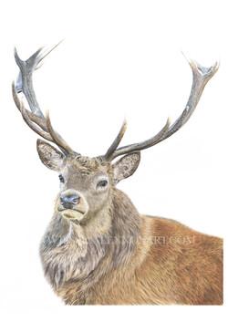 SOLD Red Deer
