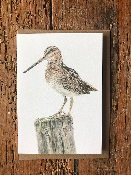 Snipe Study Greeting Card