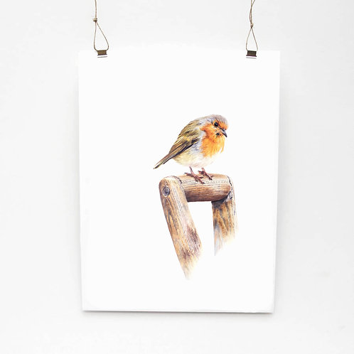 Robin Redbreast Limited Edition Print