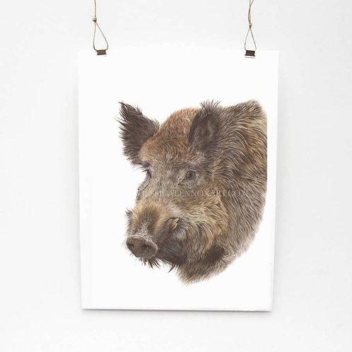 Wild Boar Limited Edition Print
