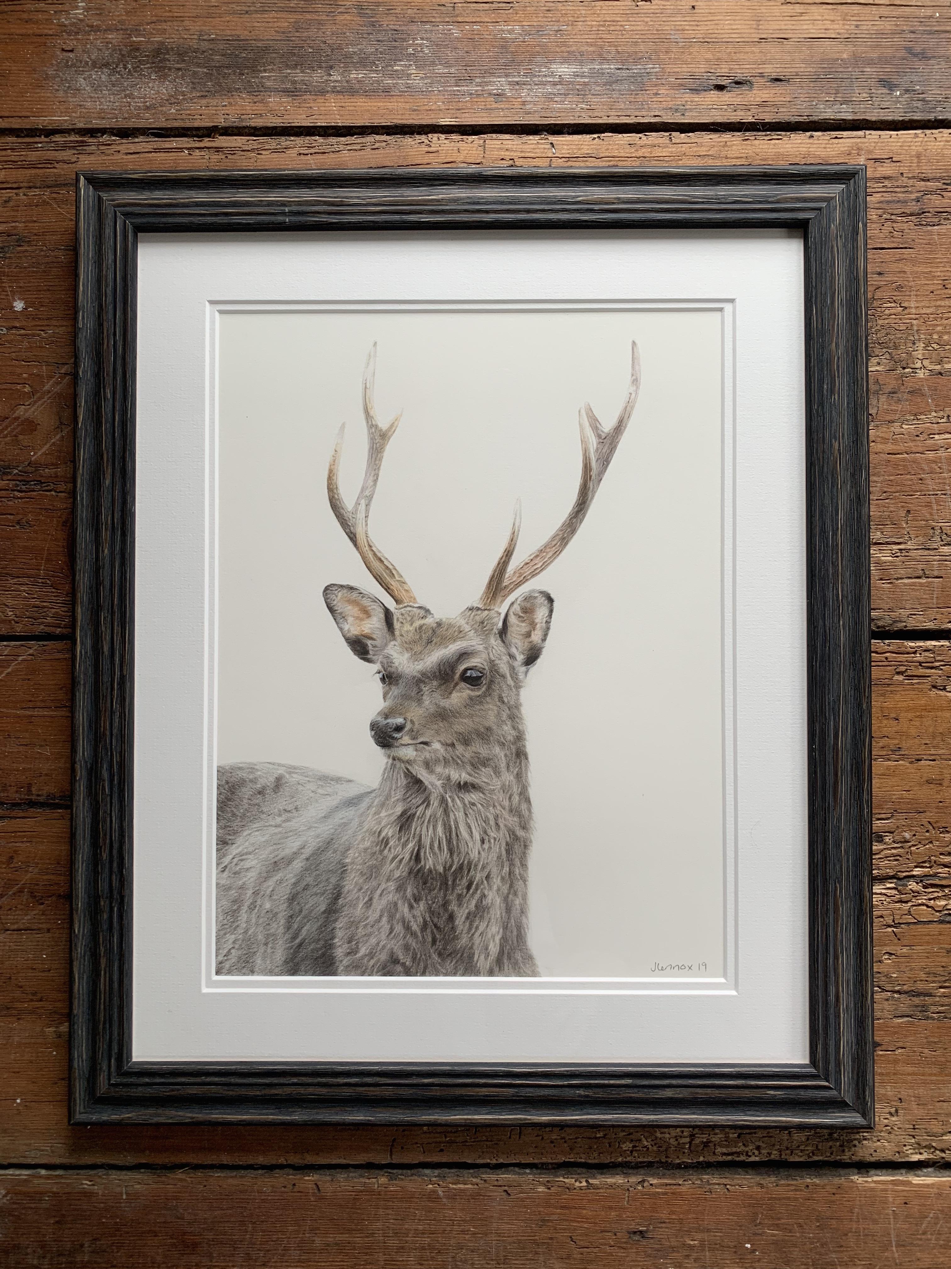 SOLD Sika Deer £1700