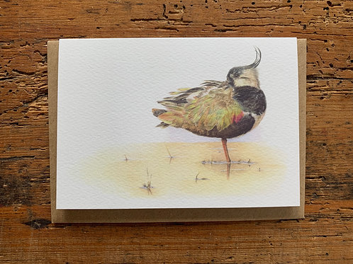 Lapwing Study Greeting Card
